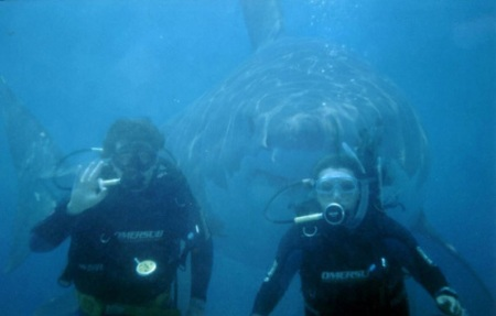 shark behind divers